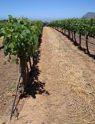 Groot Constantia Wine Estate